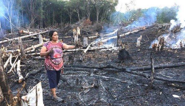 Bornéo, une île dévastée