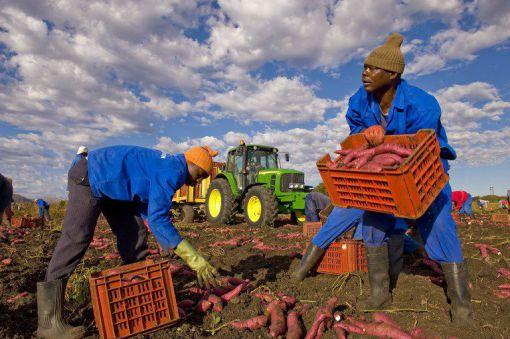 Afrique du Sud : les tribulations autour de l'incontournable réforme agraire