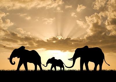 Massacre d'éléphants au Mozambique