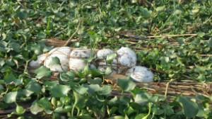 Rwanda/Burundi : Une enquête indépendante doit être menée sur les cadavres du Lac Rweru