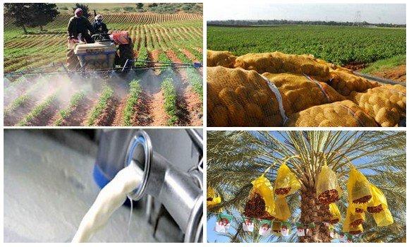 Algérie : A grands pas vers l'autosuffisance alimentaire