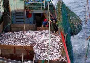 Accord de pêche UE-Maroc: la Commission européenne respectera l'arrêt de la CJUE