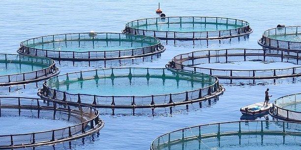 Algérie : un cumul de 1,7 milliard de dollars investis dans l'aquaculture